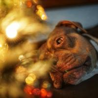 How to Make Sure Your Furry Friends are Comfortable this New Year's Eve