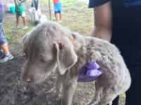 Rescued Aspin puppy named Christmas gets new lease on life